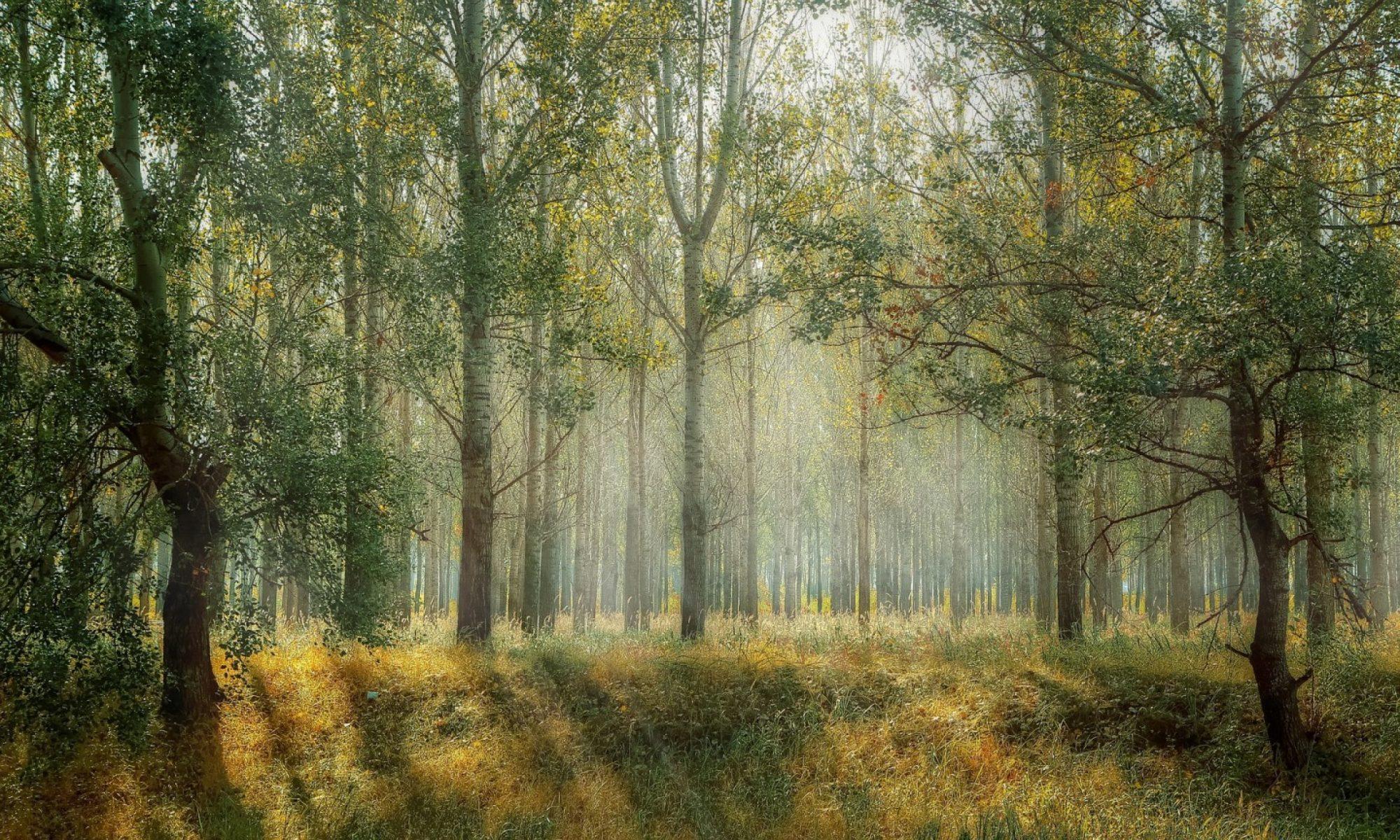 Hutan Indonesia sebagai Solusi Masa Depan Dunia