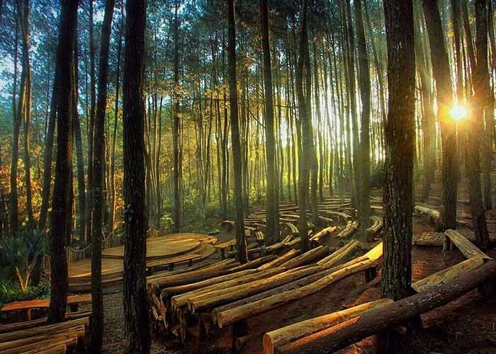 Menelisik Lebih Jauh Hutan Pinus