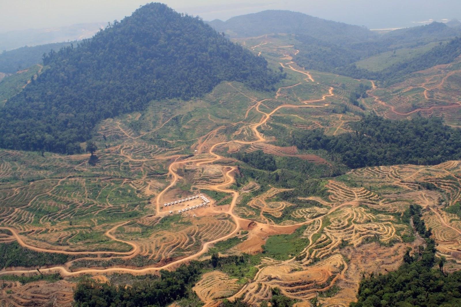Melihat Wajah Hutan Indonesia Di Masa Depan