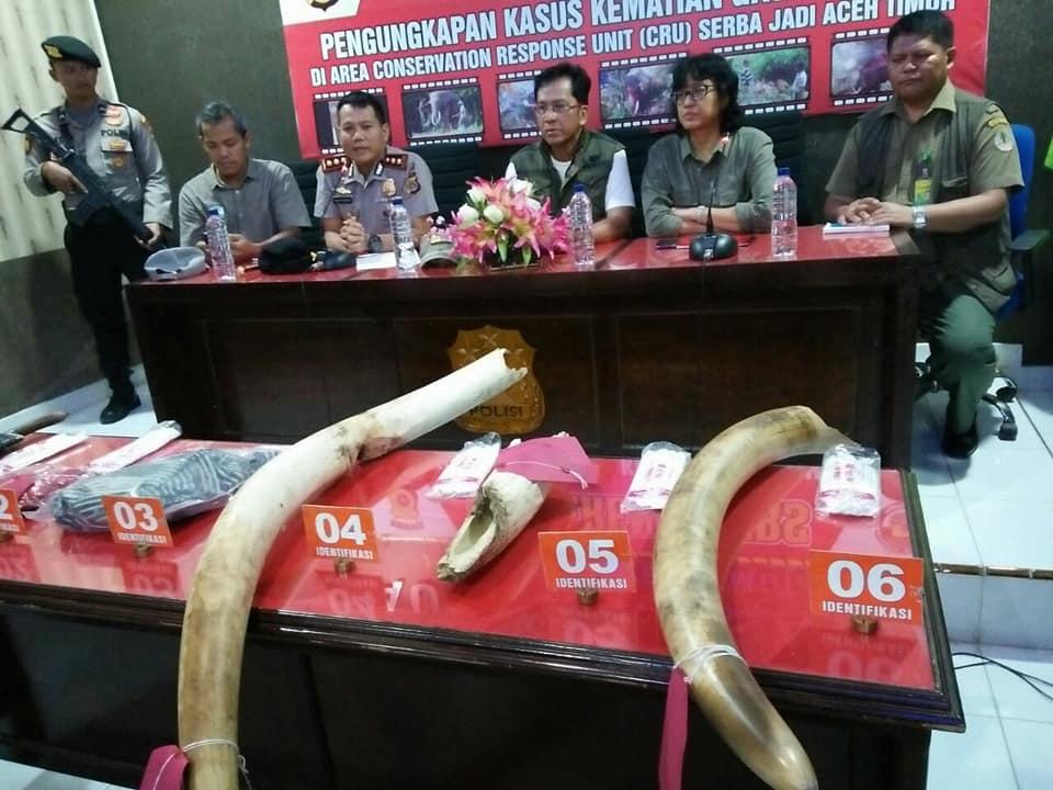 TERUNGKAP! Pembunuhan Gajah Bunta di Aceh Timur