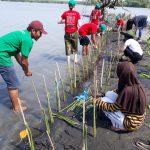 Bersama Lindungi Hutan dan IIWC Lestarikan Mangrove di Mangkang