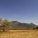 Bosan ke Pantai atau Gunung? Kamu Wajib Datangi Baluran National Park, Lihat Keindahannya!