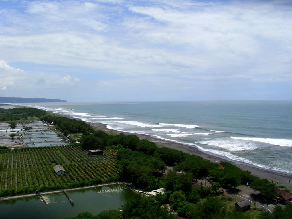 Cemara Udang Melindungi Pantai dari Abrasi