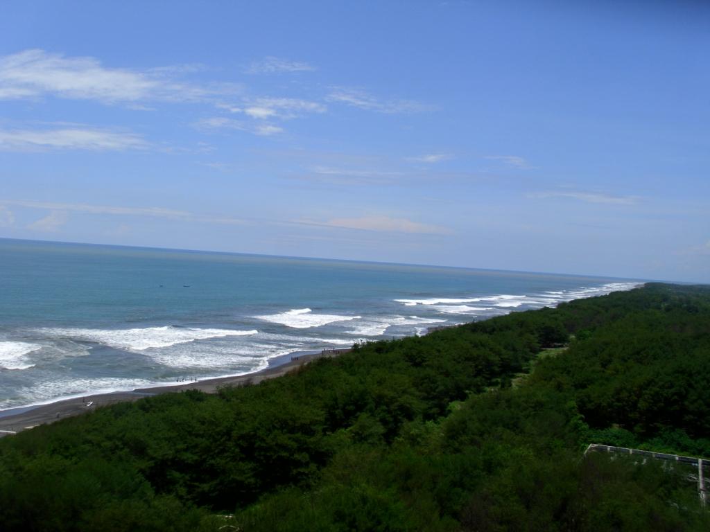 Cemara Laut