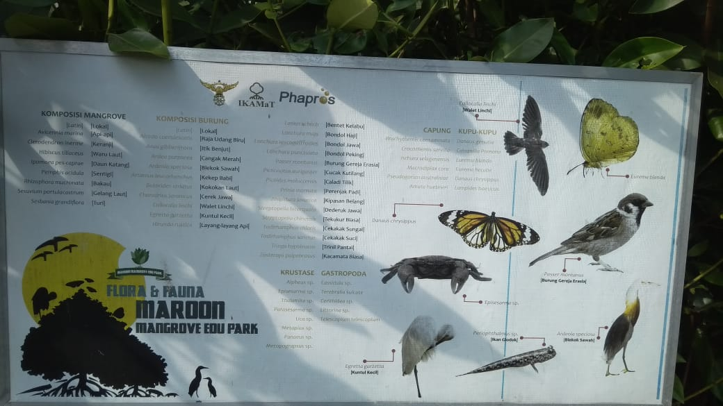 Spesies yang Menghuni Maron Mangrove Edupark Semarang
