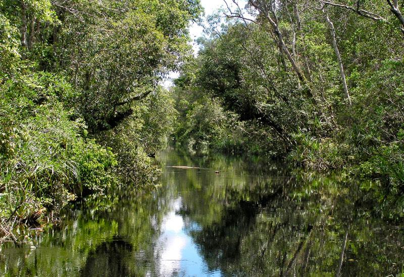 Hutan Gambut di Kalimantan