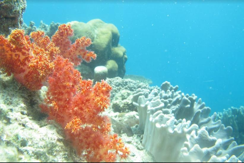Karimunjawa. Surga bagi Habitat Laut Indonesia