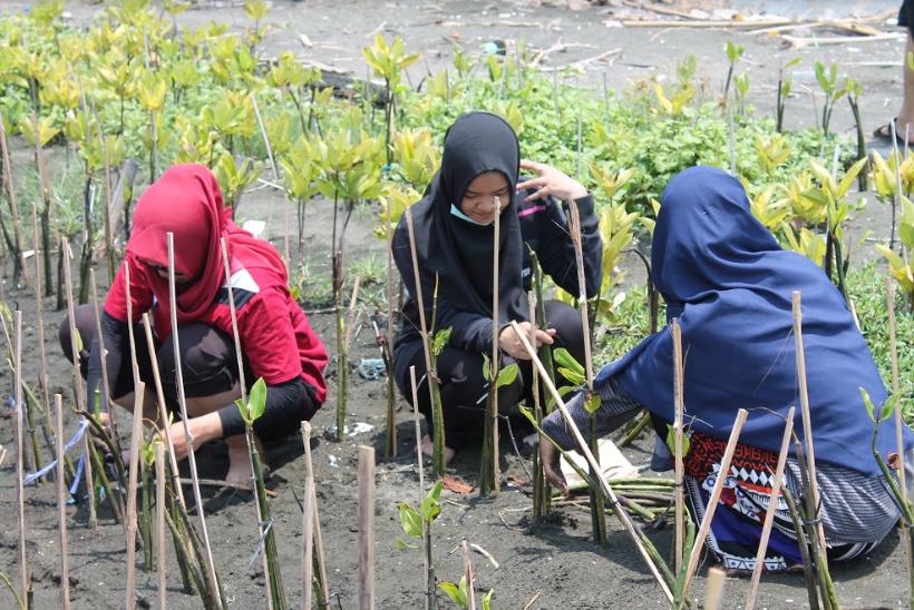 Penanaman Mangrove oleh Relawan LindungiHutan untuk Selamatkan Pesisir