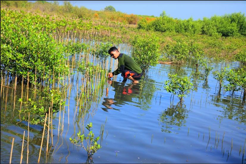 Tanam Mangrove untuk Pantai Tirang