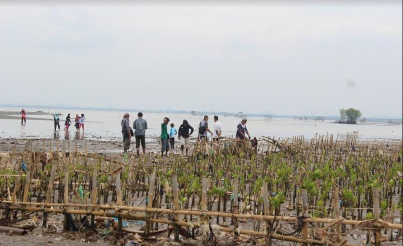 Relawan LindungiHutan Demak dalam kegiatan konservasi alam