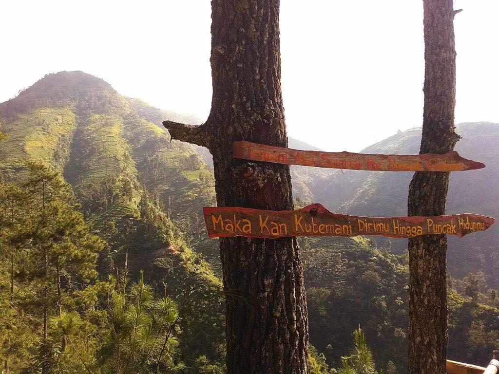 9 Dampak Akibat Kerusakan Hutan Bagi Lingkungan Hidup Wanaswara