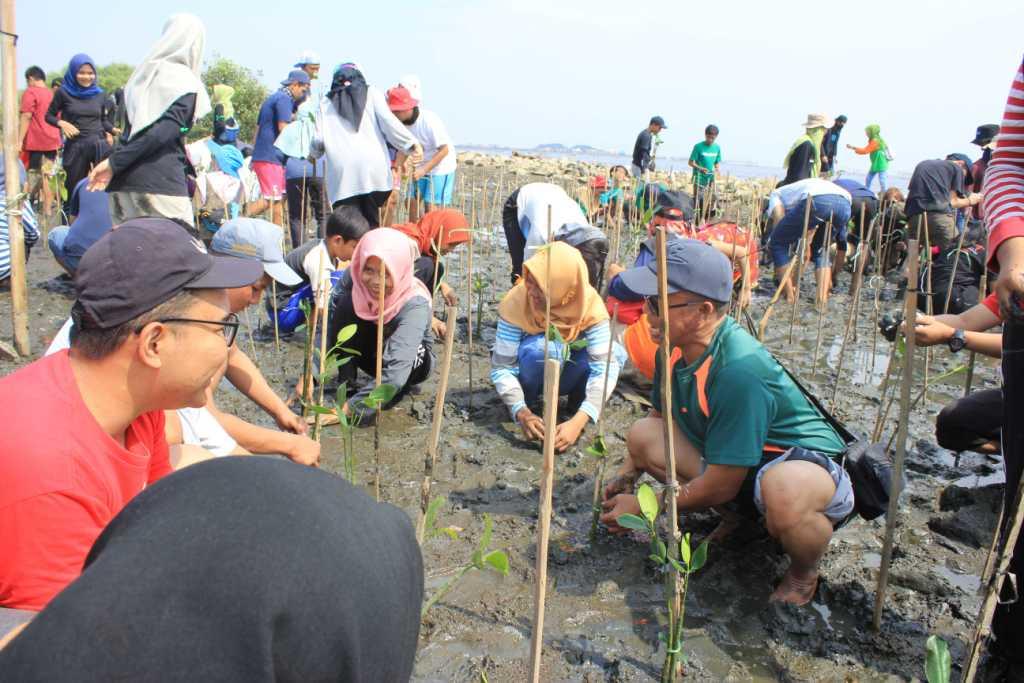Save Mangrove, Mangrove Save You