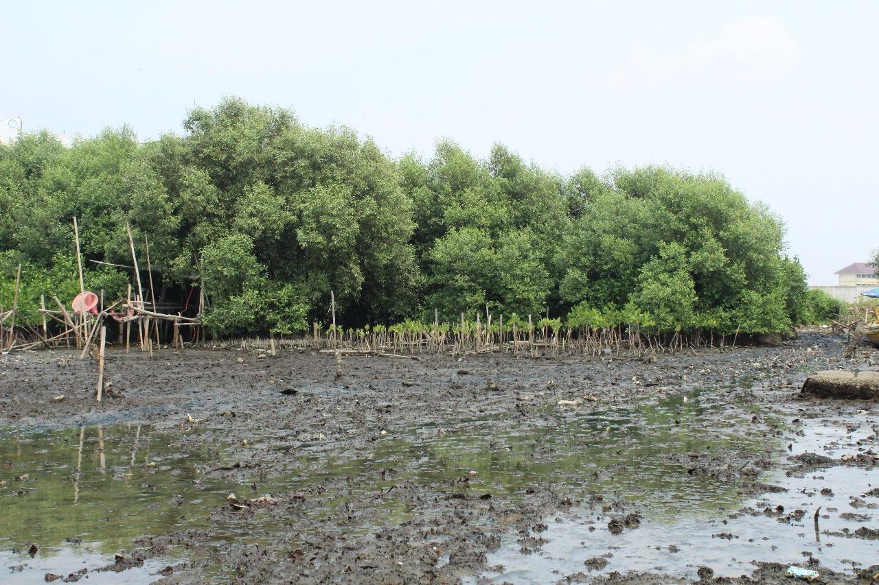 Fungsi Hutan Mangrove dapat Mereduksi Gelombang Air Laut