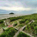 15 Fungsi Hutan Mangrove Bagi Konservasi Pantai dan Daerah Pesisir