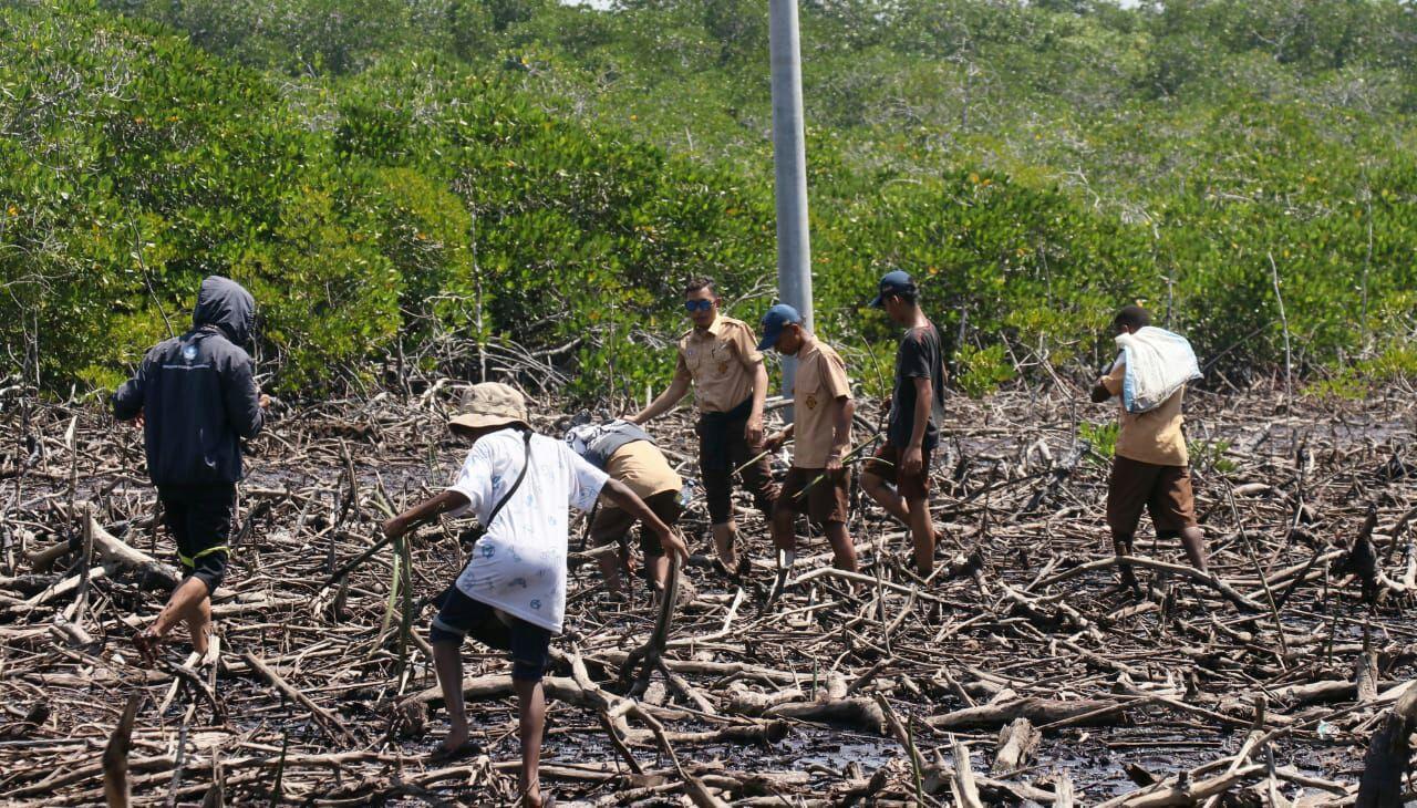 Peringati Hari Mangrove, Relawan LindungiHutan Jayapura Tanam Mangrove di Teluk Yotefa