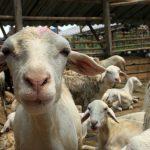 Alternatif Pengganti Kresek Tempat Daging Qurban, Untuk Idul Adha Lebih Ramah Lingkungan