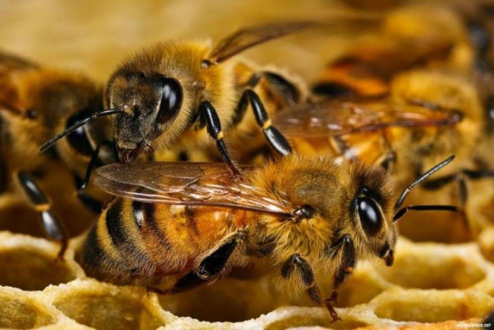 Berkat Lebah, KTH Klanceng Kalipoh Sabet Penghargaan Wana Lestari