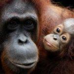 5 Hewan Endemik Nan Lucu Namun Terancam Kepunahan