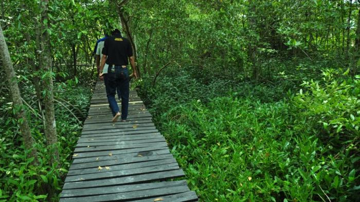 Mengapa Pemantauan Ekosistem Mangrove Penting?