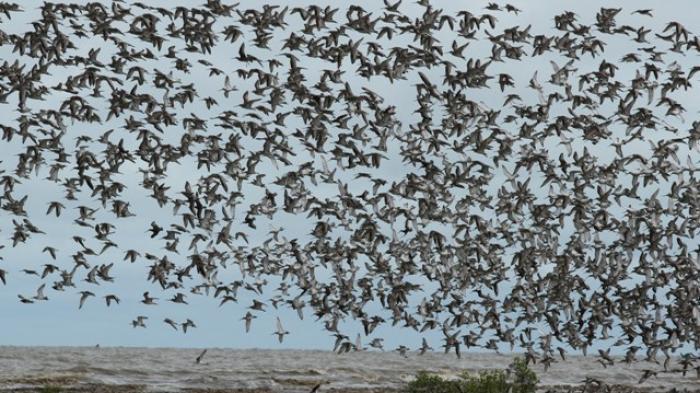 Surga Ribuan Burung yang Singgah