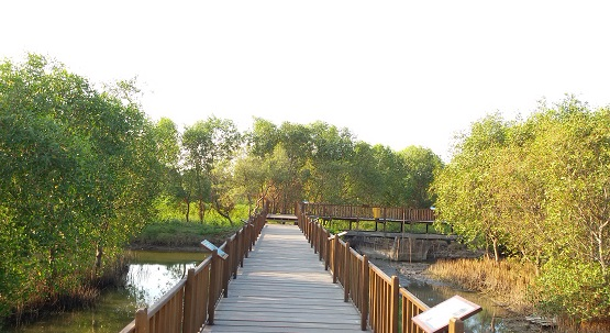 Kawasan Wisata Mangrove Wonorejo
