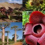 Tumbuhan Langka Di Dunia Yang Perlu Dilestarikan