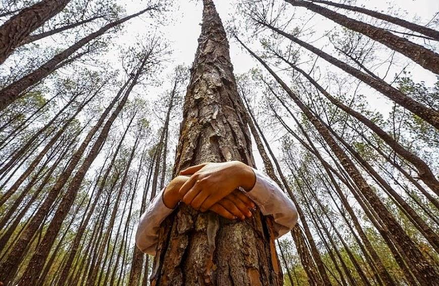 Mewaraskan Diri Dengan Memeluk Pohon
