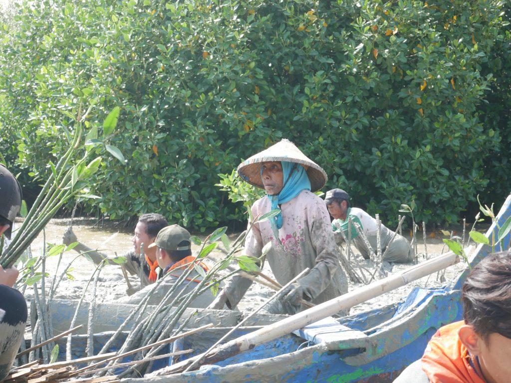 Mak Jah Semangat Menanam Mangrove