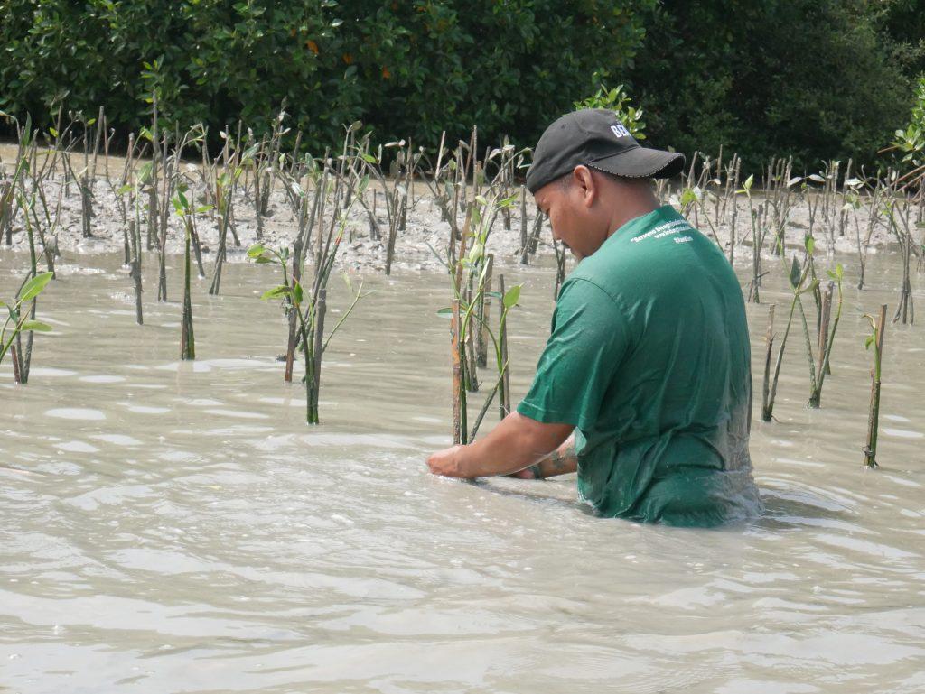 Mangrove Cegah Abrasi Pantai