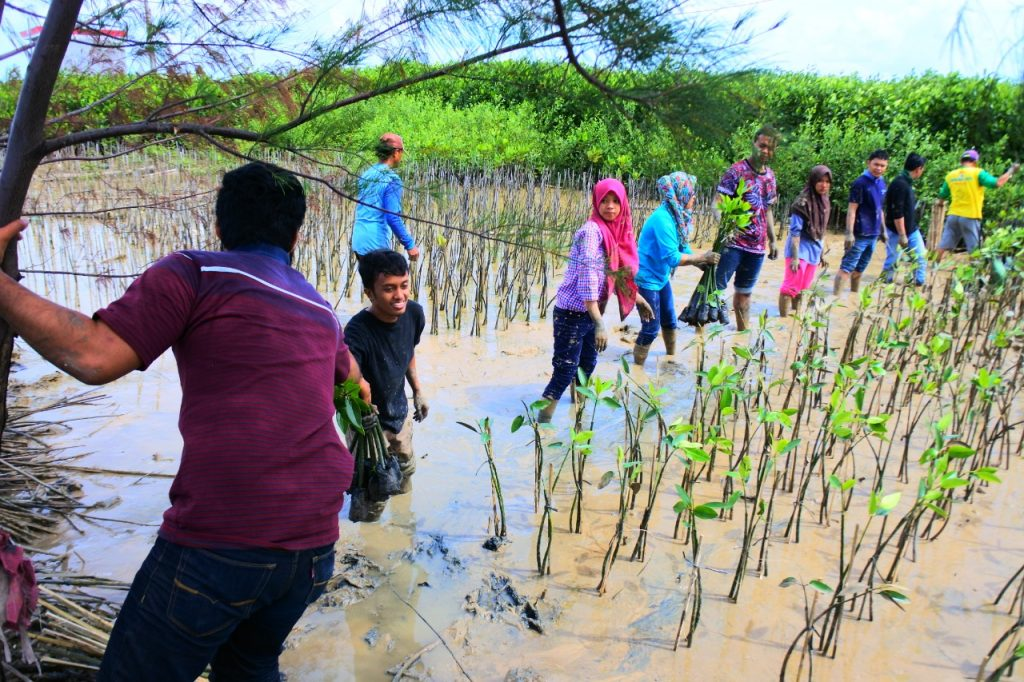 Saya Bertugas Memberikan Mangrove dari Tempat yang Lebih Bersih