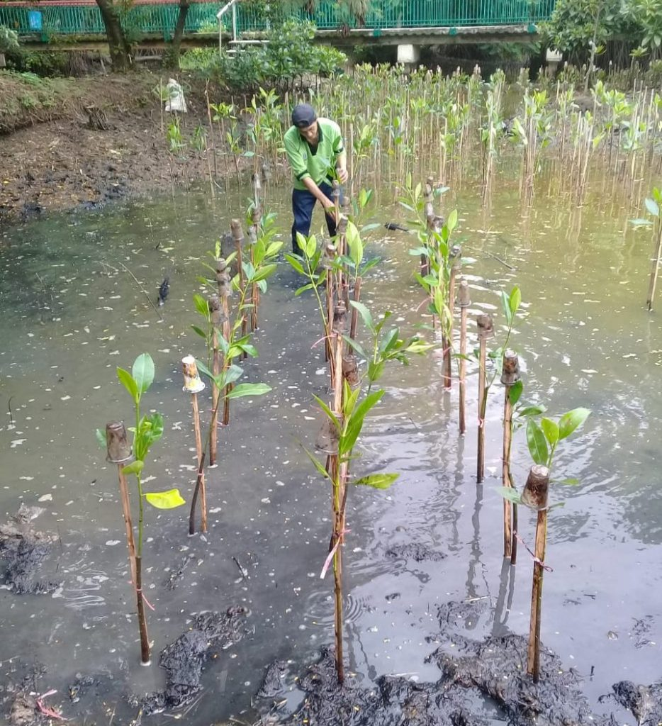 30 Bibit Mangrove untuk Jakarta yang Lebih Hijau