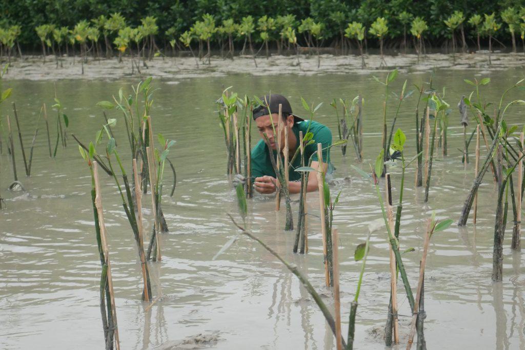 Kaloka, Untuk 1.000 Mangrove Peduli Pesisir Demak